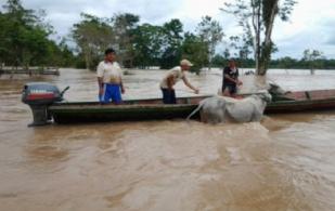 Vacunador en el Amazonas