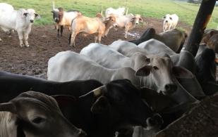 Ganadería El Cuadril, producción eficiente, ganado extra, nunca comercializa vacas, cortes finos, integración vertical, puntos de venta de carne, ventas por internet, evaluación permanente del negocio, retos y metas bianuales, CONtexto Ganadero, noticias de ganadería colombiana.