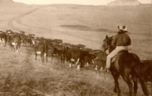 Cowboy, cattle drives, vaquero, el origen del vaquero, el origen del cowboy, las campañas de arreo de ganado, Trashumancia en Estados Unidos, cattle drives en español, cattle drives United States, cowboy en español, el vaquero de Estados Unidos, el vaquero de México, vaquero México, coronavirus, coronavirus Colombia, COVID-19, cuarentena, Ganadería, ganadería colombia, noticias ganaderas, noticias ganaderas colombia, CONtexto ganadero