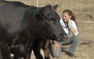 Vegetariana se convirtió en ganadera, Nicolette Hahn Niman, abogada ambientalista defiende la carne, Ganadería Sostenible, producir carne de forma sostenible, cómo producir carne, abogada ganadera, Defendiendo la carne, ganado bovino, ganadería bovina, carne, leche, ganaderos, ganaderos colombia, ganado, vacas, vacas Colombia, bovinos, Ganadería, ganadería colombia, noticias ganaderas, noticias ganaderas colombia, CONtexto ganadero, contextoganadero