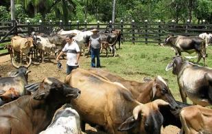 La ganadería en Colombia durante 2013