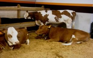 Los jornaleros que cuidan animales en Agroexpo