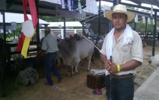 Crónica palafrenero ganado colombia