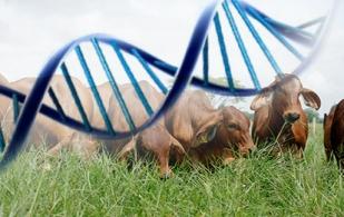 ganadería, ganadería colombia, noticias ganaderas, noticias ganaderas colombia, contexto ganadero, mejoramiento genético, sistemas agroecológicos, producción de alimentos, producción de comida, fao, dane, llina consuelo reyes castaño,