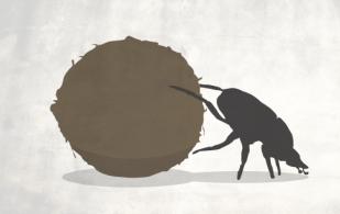 ganaderia, ganaderia colombia, contexto ganadero, noticias ganaderas, noticias ganaderas colombia, escarabajos, escarabajos estercoleros, cucarrones del estiercol, sistemas silvopastoriels, cercas vivas, arboles disperos, banco de forraje mixto, quimicos, ganadero, ganaderos colombia