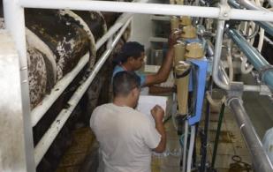 control lechero, selección para hatos productivos y rentables, cómo elegir las mejores vacas lecheras, cómo elegir los mejores bovinos para producción de leche, la importancia del control lechero, control lechero en Colombia, control lechero día a día, control lechero diario, control lechero genética, coronavirus, coronavirus Colombia, COVID-19, cuarentena, Ganadería, ganadería colombia, noticias ganaderas, noticias ganaderas colombia, CONtexto ganadero