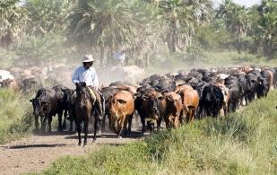 La importancia de los ciclos ganaderos