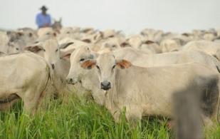 Planeación forrajera para nutrición bovina