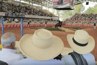 ganadería, ganadería colombia, noticias ganaderas, noticias ganaderas colombia, contexto ganadero, fedequinas, asdeoccidente, ferias equinas, ferias equinas en colombia, equinos, trabajadores informales equinos,
