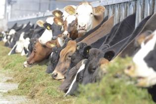 Ganadería, ganadería colombia, noticias ganaderas, noticias ganaderas colombia, CONtexto ganadero, selección, selección bovinos, eficiencia vaca, eficiencia alimenticia ganado, eficiencia alimenticia selección ganados, genómica, vaca rentable, rentabilidad vaca