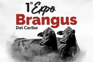 Ganadería, ganadería colombia, noticias ganaderas, noticias ganaderas colombia, CONtexto ganadero, expo brangus del caribe, eventos angus y brangus, angus y brangus de colombia, asociación angus y brangus, asoangusbrangus en agroexpo, agroexpo 2021,