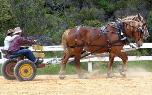 Prueba de caballos de tiro pesado