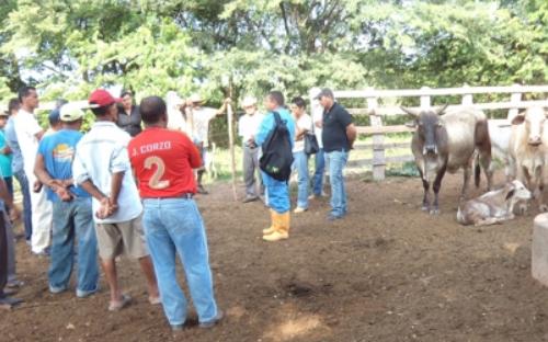 Es clave implementar cercas y pozos que permitan mantener en óptimas condiciones la salud de los animales y las praderas en las que el ganado se encuentra.