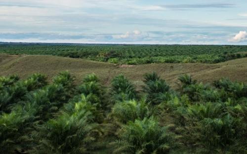 fauna,poligrow,conservación,palma,aceite,deforestación,CONtextoganadero