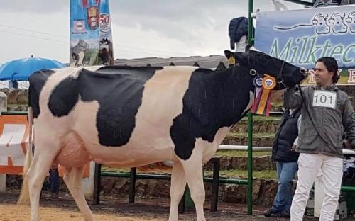 Francisco Rodríguez Colganados, Colganados Genetics, jóvenes empresarios en Colombia, jóvenes ganadería Colombia, mejor vaca Holstein, la vaca del millón de dólares, Colganados Colombia, empresa ganadera, emprendimiento en ganadería, emprendimiento Colombia, empresa Colombia, CONtexto ganadero, ganaderos Colombia, noticias ganaderas Colombia