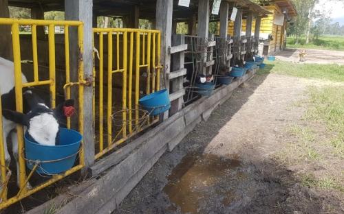 Ganadero Saboyá Boyacá, José Rafael Rojas, crónica ganadero Boyacá, producción de un ganadero Boyacá, producción leche ganadero Boyacá, historia de ganadero en Boyacá, historia de ganadero en Saboyá, producción de leche Colombia, mejor producción leche, ganadería medio ambiente, Círculos de excelencia ganaderos, CONtexto ganadero, ganaderos colombia, noticias ganaderas colombia