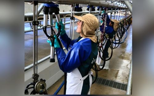 Manuka, leche Chile, producción leche Chile, sistema de producción de leche Chile, leche Nueva Zelanda, sistema producción de leche de Nueva Zelanda, Manuka Chile, manejo de praderas, producción de leche con pastoreo, producción de leche con pastos, CONtexto ganadero, ganaderos Colombia, noticias ganaderas Colombia