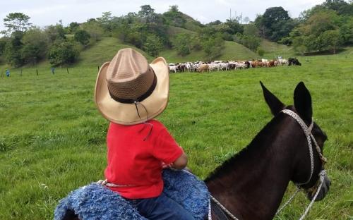 El Pajuil, Hacienda El Pajuil, Pastoreo Ultra Alta Densidad, PUAD, pastoreo no selectivo, Competir por el pasto, pastoreo ultra alta densidad colombia, rentabilidad en ganadería, eficiencia bovina, Asociación Colombiana de Ganadería Regenerativa, Acoganar, ganadería rentable y regenerativa, Ganadería regenerativa, ganadería, ganadería Colombia, CONtexto ganadero, ganaderos colombia, noticias ganaderas colombia