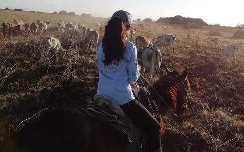 """""""Desde niño llevo la ganadería en la sangre y respiro por ella"""": Villamil Torres, hijo del azulejo del Llano, transferencia de conocimiento, coordinador regional de Fedegán-FNG, talante llanero, sanidad, bienestar animal, capacidad de innovación, cría de raza Brahman blanco, trihibrido, cruce de Criollo Casanareño con Miura y Senepol, línea genética, mayor peso, mayor volumen, tamaño grande, introducir producción bufalina, repartidor de leche, añoranzas, sabana inundable, noticias de ganadería colombiana, C"""