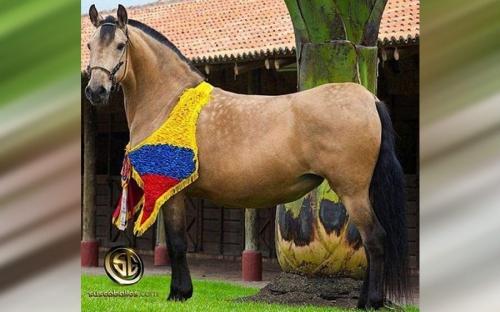ganadería, ganadería colombia, noticias ganaderas, noticias ganaderas colombia, contexto ganadero, caballo criollo colombiano, raza caballo criollo colombiano, caballo paso fino colombiano, caballo trocha colombiano, caballo trocha y galope colombia, caballo trote y galope colombia