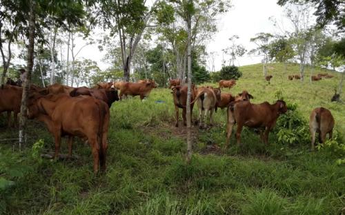 fincas ecológicas colombia
