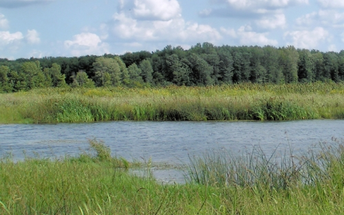 fuentes hídricas en la ganadería
