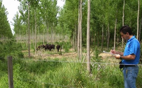 contaminación por el ganado