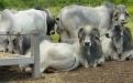 concentrados ganado de leche y doble propósito