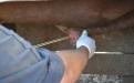 manejo integral del toro, selección del toro, características del toro, eficiencia reproductiva del toro, uso del toro en la finca, sanidad del toro, manejo animal, CONtexto ganadero