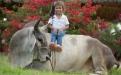 Raza Guzerá, María Antonia Torres Díaz, ganaderita de Córdoba, apasionada por los Guzerá, veterinaria, CONtexto ganadero