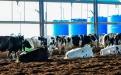 Grupo Chiavassa, Cristian Chiavassa, lechería en Argentina, producción lechera Argentina, tambo Argentina, crónica Grupo Chiavassa, producción leche Argentina, ganadería de leche Argentina, tecnología ganadería, sala rotativa de ordeño, tecnología en lechería, ganaderos Argentina, CONtexto ganadero, ganaderos colombia, noticias ganaderas Colombia