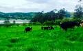 Ganadera de Pasto, productora de leche en Pasto, producción de leche en Nariño, ganadería en Nariño, crónica de ganadera de Colombia, mujer ganadera, CONtexto ganadero, ganaderos Colombia, noticias ganaderas Colombia