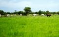 Hacienda San José, Agropecuaria Bambusa SAS, Gabriel Jaramillo Sanint, Hacienda San José Vichada, proyecto ganadería Vichada, proyecto ganadería ciclo corto, proyecto para aumentar producción de carne bovina, producción de carne bovina, ganadería en Vichada, CONtexto ganadero, ganadero Colombia, noticias ganaderas Colombia