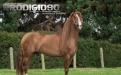 equitacion, equinos, caballo, competenencias equinas, ganaderia colombia, ganaderia, contexto ganadero, contexto ganadero, exposiciones equinas, concursos equinos, prodigioso, caballo campeon, saltos