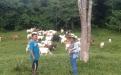 ganaderia, ganaderia colombiana, ganaderia colombia, contexto ganadero, noticias ganaderas, noticias ganaderas colombia, juan manuel herrera, inseminacion artificial, fenotipos, nacimiento animales, pastoreo rotacional, suplementacion alimenticia, ganadero, tolima, ganadero colombia, ganaderos, ibague