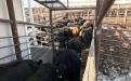 Peterson Farm Brothers, granja de los Peterson, ganaderos Peterson, hermanos Peterson, ganaderos de carne, defensa de la ganadería, ganadería redes sociales, parodias de canciones en redes sociales, producción agropecuaria Estados Unidos, ganadería Estados Unidos, cifras de la producción láctea en Estados Unidos, USA, eeuu, Cifras de la ganadería bovina de Estados Unidos, CONtexto ganadero, ganadería colombia, noticias ganaderas Colombia