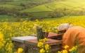 apicultura, abejas, miel, exportación, Producción, colmenas, zánganos, reina, Fedeabejas, negocio, mercado, consumo, beneficios, potencial, comercialización, Contrabando, Venezuela, costos, precios, fomento, apoyo, Minagricultura, Ganadería, ganadería colombia, noticias ganaderas colombia, CONtexto ganadero.