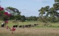 El Rosario, tradición, Córdoba, carne, buenas prácticas ganaderas, sostenibilidad, certificación, exportaciones, turismo, barreras fitosanitarias, mercados internacionales, Objetivos de Desarrollo Sostenible , trazabilidad, registros, ganadería, ganadería colombia, noticias ganaderas colombia, contexto ganadero.