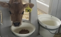 Bienestar animal ganadería leche, bienestar animal estados unidos, bienestar animal vacas de leche, bienestar animal vacas lecheras, Nathan Chittenden, granja Dutch Hollow Farm LLC, jersey, lechería bienestar animal, las vacas no sufren en lecherías, no hay sufrimiento, ganaderos, ganaderos colombia, ganado, bovinos, ganado bovino, Ganadería, ganadería colombia, noticias ganaderas, noticias ganaderas colombia, CONtexto ganadero, contextoganadero