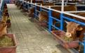 """""""Mejoraremos el precepto Wagyu de ser la mejor carne del mundo"""": Marco Orozco, animales puros en colombia, wagyu estabulado, wagyu estabulado en colombia, embriones wagyu, técnicas de reproducción wagyu, programa de mejoramiento genético waguyu, F1 wagyu,  wagyu colombia, raza wagyu, ganadería, ganadería colombia, noticias ganaderas, noticias ganaderas colombia, contexto ganadero,"""