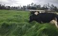 ganadería, ganadería colombia, noticias ganaderas, noticias ganaderas colombia, contexto ganadero, Alvaro Ospina, ganadería colombia, productos naturales, productos naturales para ganadería colombiana, productos naturales para bovinos, productos naturales para cerdos, productos naturales para aves, productos naturales para peces