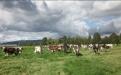 Hato ganaderos con toros.jpg