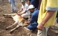 El cuidado del ganado, su reproducción y mejoramiento genético otros temas a tratar dentro de este convenio.