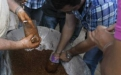 Día de Campo PAB Ariguani (Magdalena). Ganaderos compactando bloque nutricional en vaso desechable.