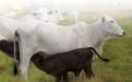 tecnología para la ganadería