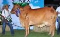 Medidas bovinométricas