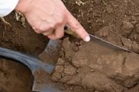 Agrosavia, análisis de suelos, fertilización, planes de fertilización, rentabilidad, Servientrega – Efecty, Ganadería, ganadería colombiana, noticias ganaderas, noticias ganaderas Colombia, CONtexto ganadero