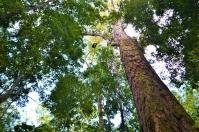 Ganadería, ganadería colombia, noticias ganaderas, noticias ganaderas colombia, CONtexto ganadero, árboles, cambio climático árboles, adaptación árboles al cambio climático, cambio climatico arbol de problemas, Cambio climático, podemos parar el cambio climatico plantando arboles, como afecta el cambio climatico a los arboles, bosques y cambio climatico pdf, la deforestacion contribuye al cambio climatico, que relacion hay entre los bosques y el cambio climatico brainly, reforestacion de arboles