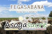 Fegasabana y Asogasucre se unen en propósitos del desarrollo ganadero, unidad ganadera nacional, unión para el crecimiento y modernización, Fedegán cerca de Sucre, oficializar la unión, CONtexto ganadero, noticias de ganadería colombiana.