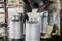 Inició alza del precio de leche al productor en Cundinamarca, pasteurizadoras están llamando a comprar leche, disminuye producción, Costa Caribe y Llanos orientales en difícil situación, Antioquia cubre sus necesidades de consumo, Antioquia comercializa leche a la Costa, CONtexto ganadero, noticias de ganadería colombiana.